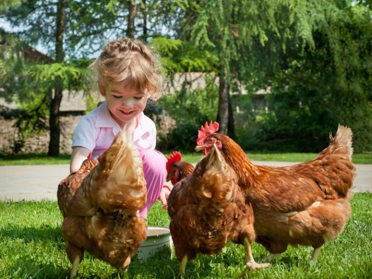 Девушка курица картинка