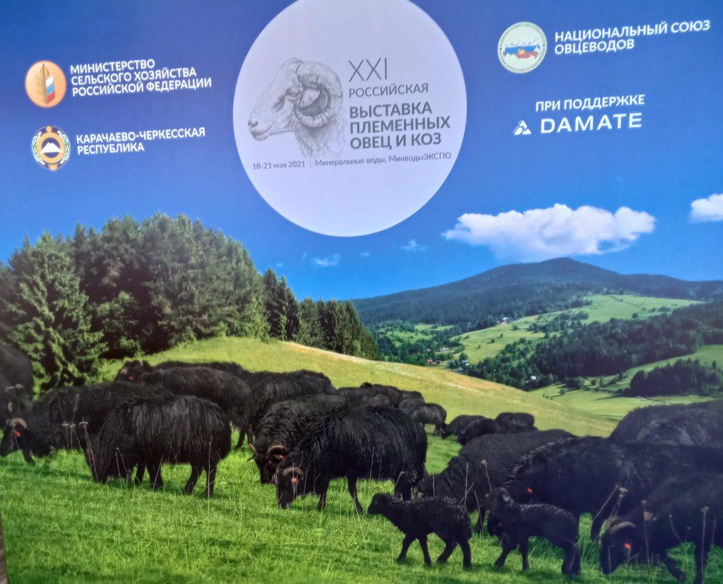 Минводский комбикормовый завод на Всероссийской выставке племенных овец и коз.